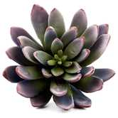 Purple & Green Succulent Pick